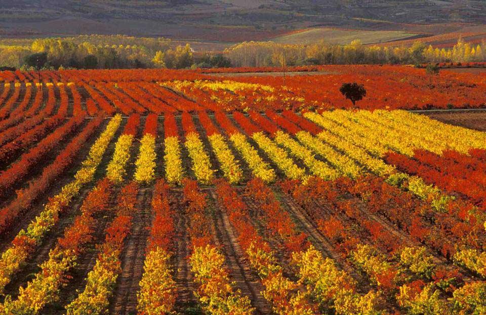 Otoño en Badaran,  La Rioja.   Fotógrafa: Inés Linares